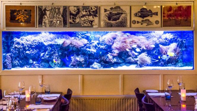 Lucius aquarium - Visrestaurant Lucius, Amsterdam