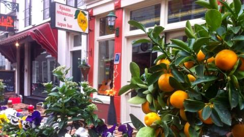 Limon, The Hague