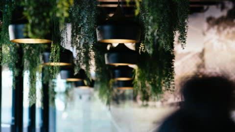 Ficus, Perth